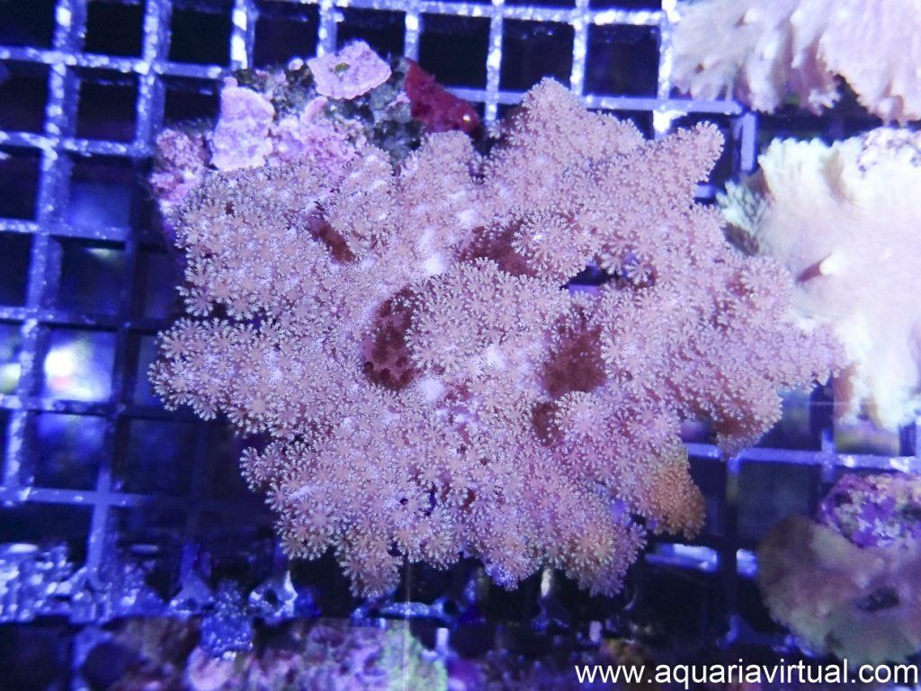 aquaria-10.jpg