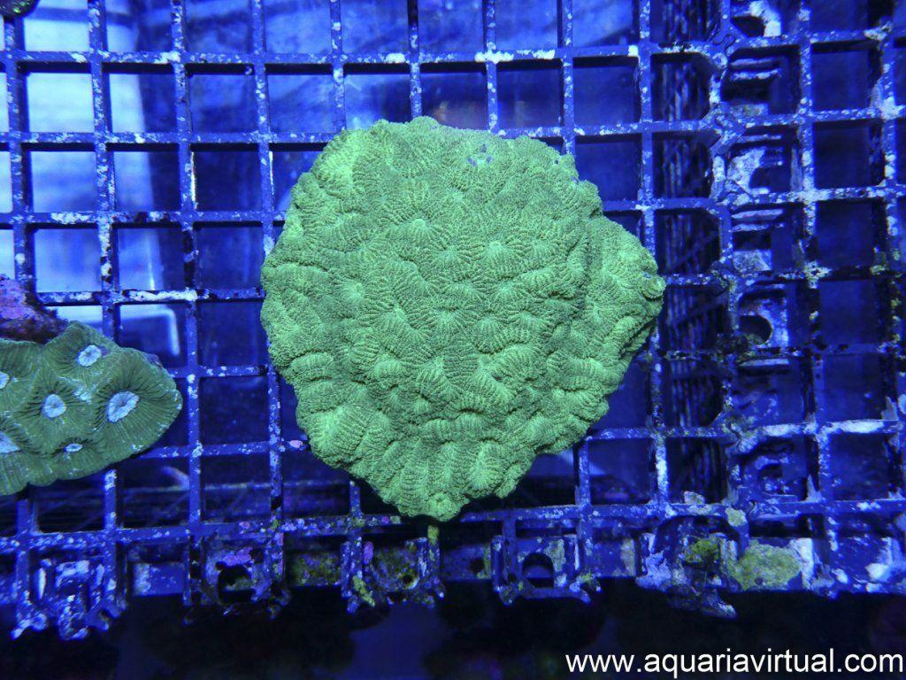 aquaria-2.jpg
