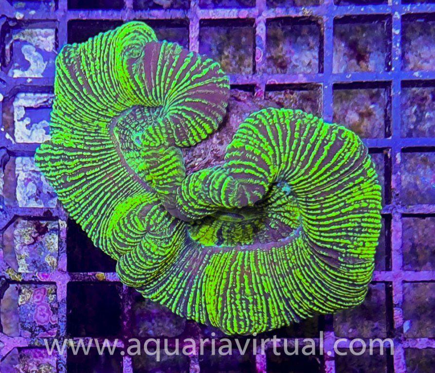 aquaria-3107.jpg