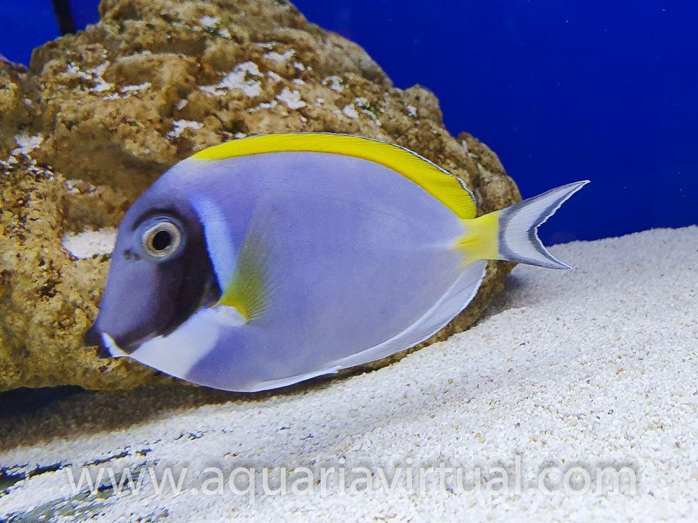 aquaria-3110.jpg