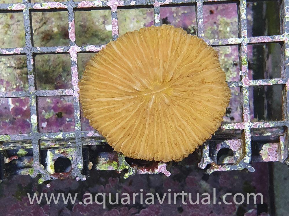 aquaria-3162.jpg