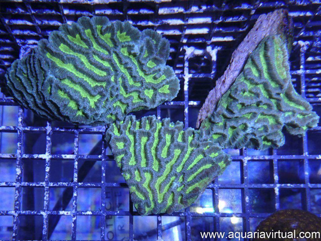 aquaria-4.jpg