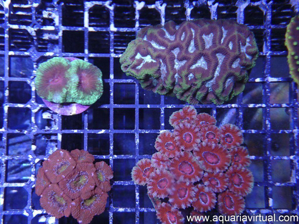 aquaria-5.jpg