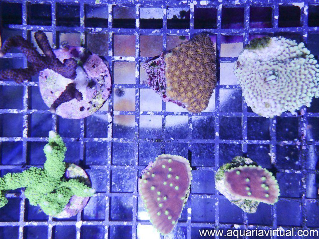 aquaria-7.jpg