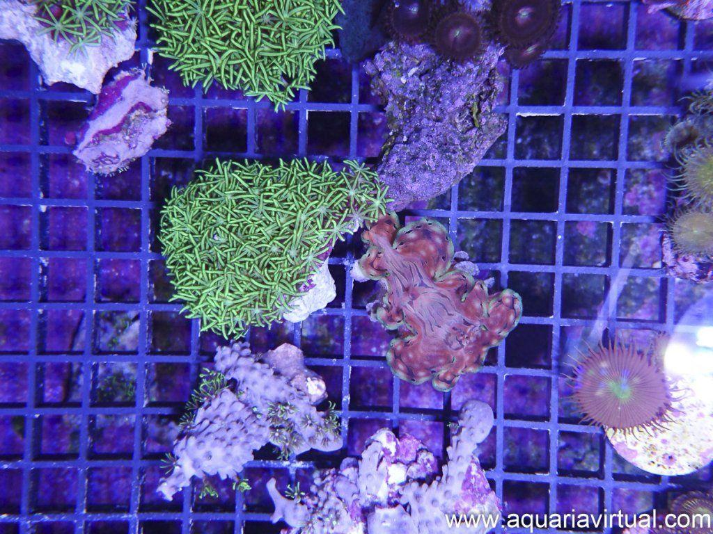 aquaria-8.jpg
