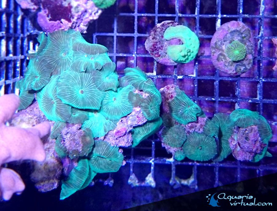 coral_5abr.jpg