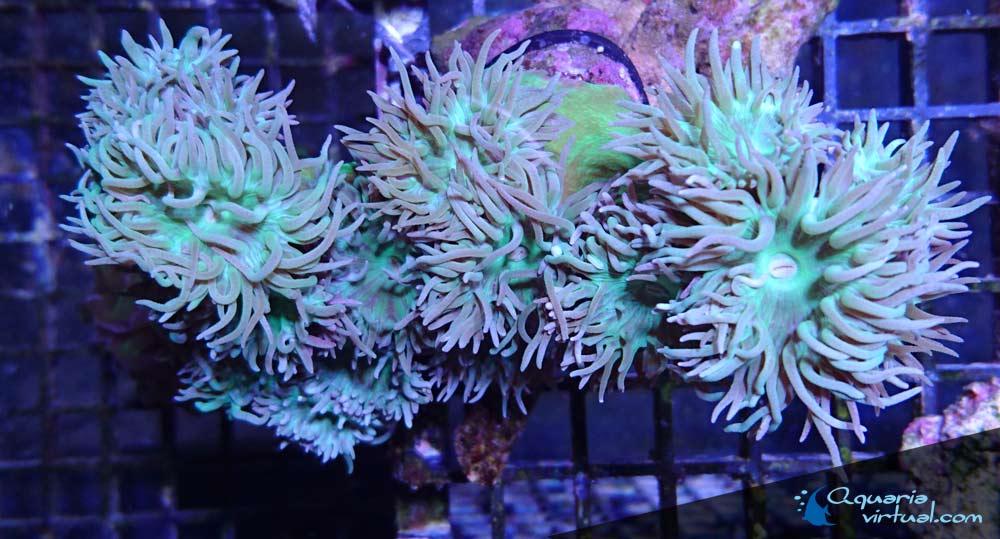 corales_4abr.jpg