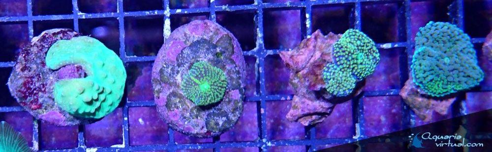 corales_5abril.jpg