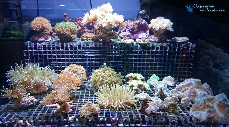 corales_general1.jpg