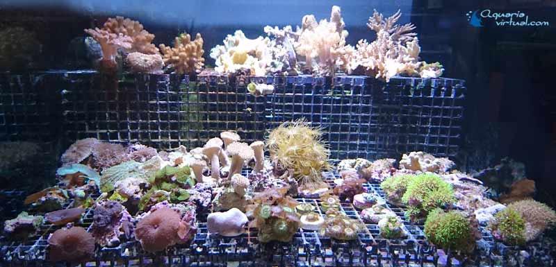corales_general2.jpg
