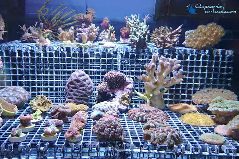 corales_general3.jpg