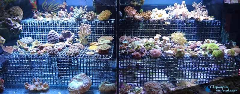 corales_general4.jpg