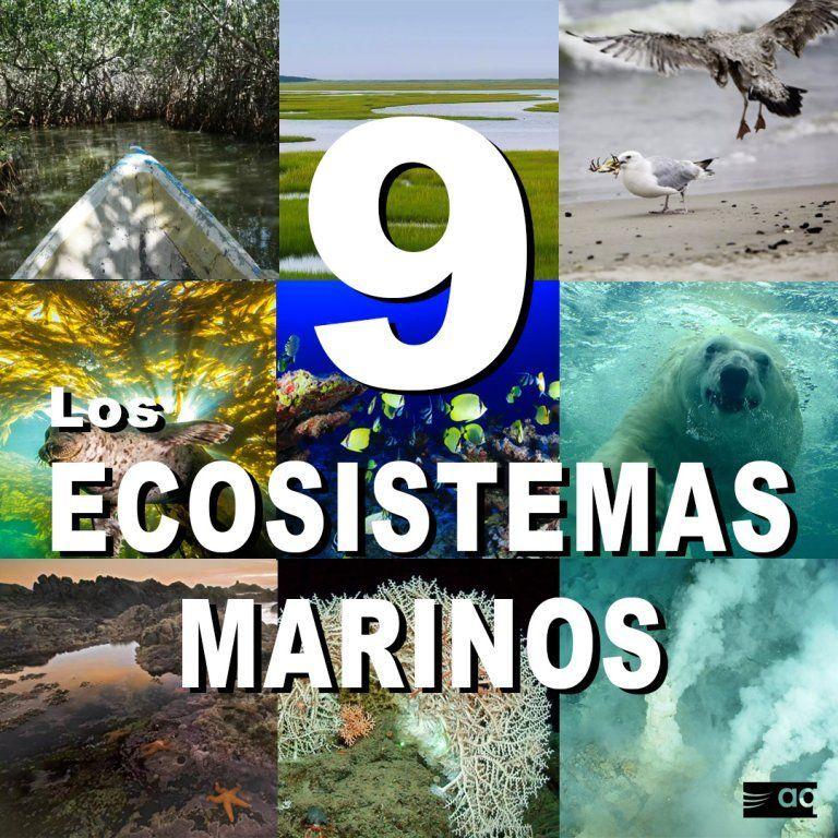 ecosistemas marinos.jpg