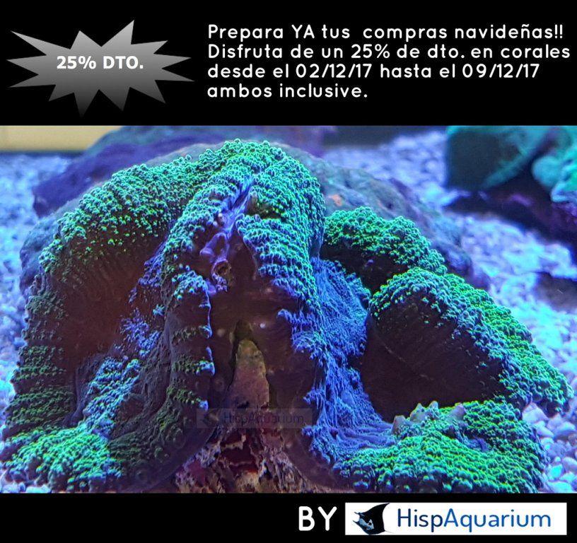 FLAYER (coral) 2 diciembre 17 pq.jpg