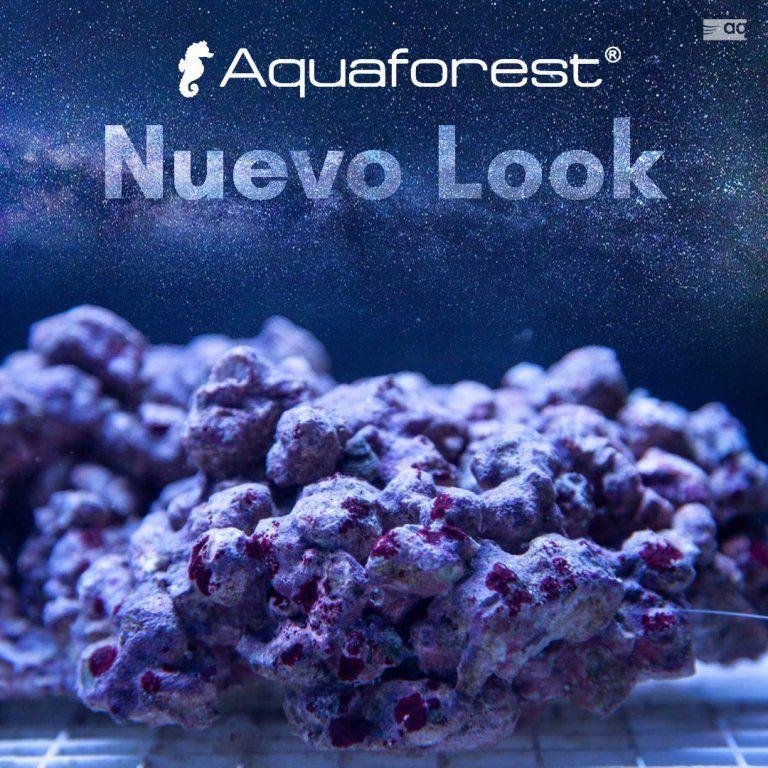 Nueva AF Rock1.jpg