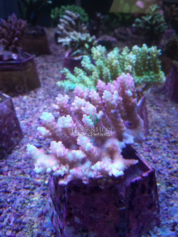Rock&Reef_SSC.jpg