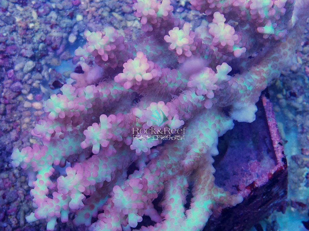 `SSCRock&Reef.jpg
