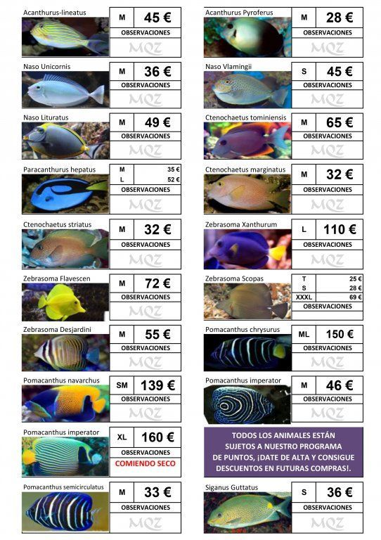 Stocklist - MasQueZoas -10101902.jpg