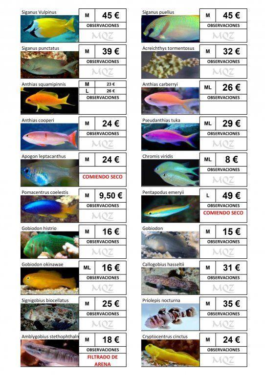 Stocklist - MasQueZoas -10101903.jpg