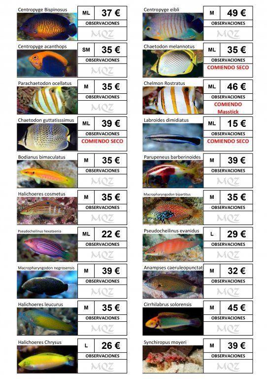 Stocklist - MasQueZoas -10101905.jpg