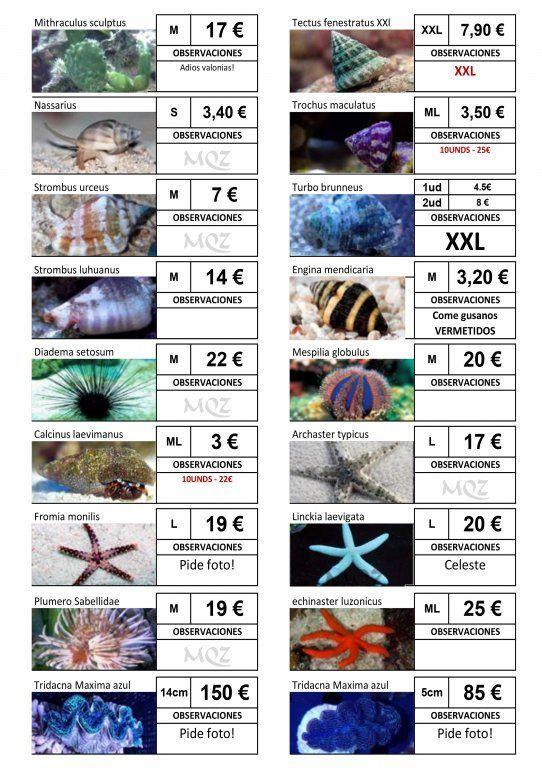 Stocklist - MasQueZoas -10101907.jpg