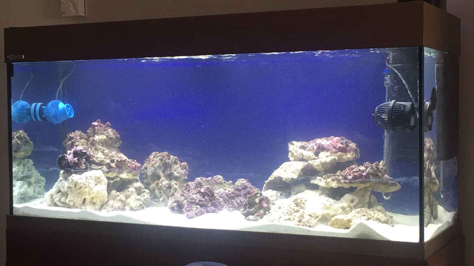 WhatsApp Image 2018-03-06 at 16.37.47.jpeg